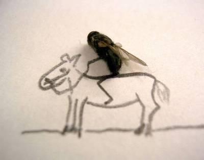 horse, horse riding, funny horse, horse art