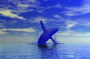 ikan paus biru, mamalia laut, hewan laut menyusui, predator laut, mahkluk laut dalam